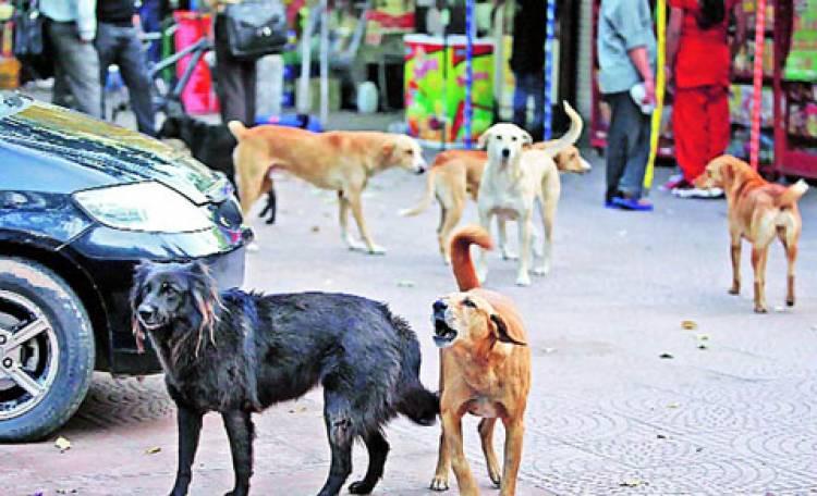 ਪੰਜਾਬ : ਹਰ ਸਾਲ ਕਰੀਬ 20 ਹਜ਼ਾਰ ਬੱਚੇ ਬਣਦੇ ਹਨ ਅਵਾਰਾ ਕੁੱਤਿਆਂ ਦਾ 'ਸ਼ਿਕਾਰ', ਸਰਕਾਰ ਬੇਪ੍ਰਵਾਹ